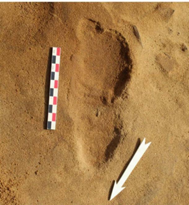 Fotografía de las amplias huellas fosilizadas encontradas en Le Rozel. (Foto: Dominique Cliquet / Haaretz)