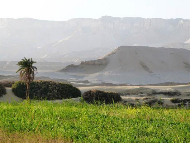 Los desiertos egipcios son un estudio de contrastes que van desde la vida verde de los oasis hasta los acantilados rocosos secos e inhóspitos. (P. Polkowski / Ciencia en Polonia)