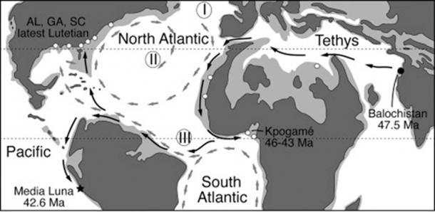 Distribución de las ballenas protocétidas durante el Eoceno medio, el período de la ballena antigua. (G. Bianucci / Cell Press/Fair Use)