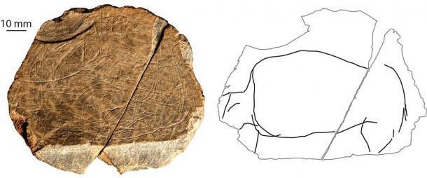 """Un """"dibujo"""" de un animal de vaca salvaje encontrado en el sitio de Jersey. El lado derecho de la imagen aísla la representación del animal, de modo que uno pueda verlo como una criatura individual. (S Bello / Museo de Historia Natural)"""