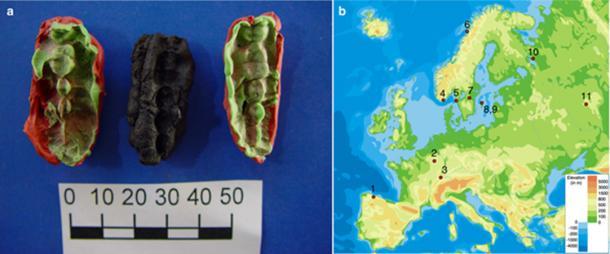 El material estudiado y su origen. A) Uno de los chicles de Huseby Klev, (Fynd 2037), con dos moldes de plastelina para cada lado. B) La ubicación de los sitios, genomas de los cuales se utilizaron en este estudio. (Imagen: Natalija Kashuba et al / Nature)