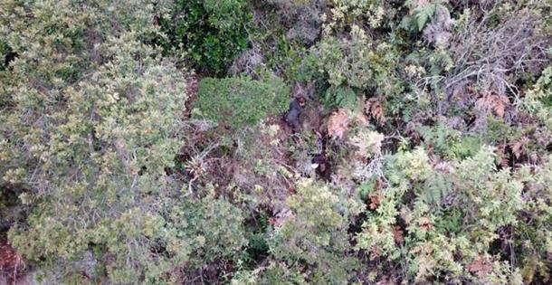 Elmore, Ioannis y Ashley luchan a través del espeso follaje del bosque