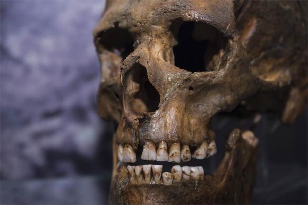 Los genetistas evolutivos realizaron un estudio del genoma de los neandertales utilizando restos encontrados en cuevas en Rusia y Croacia. (gerasimov174 / Adobe Stock)