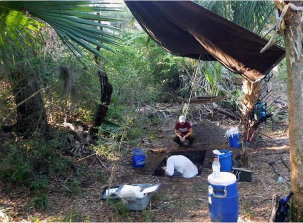 Una excavación de unidad de prueba dentro de uno de los 37 anillos de concha de la isla Raleigh. (Terry E. Barbour and Kenneth E. Sassaman)