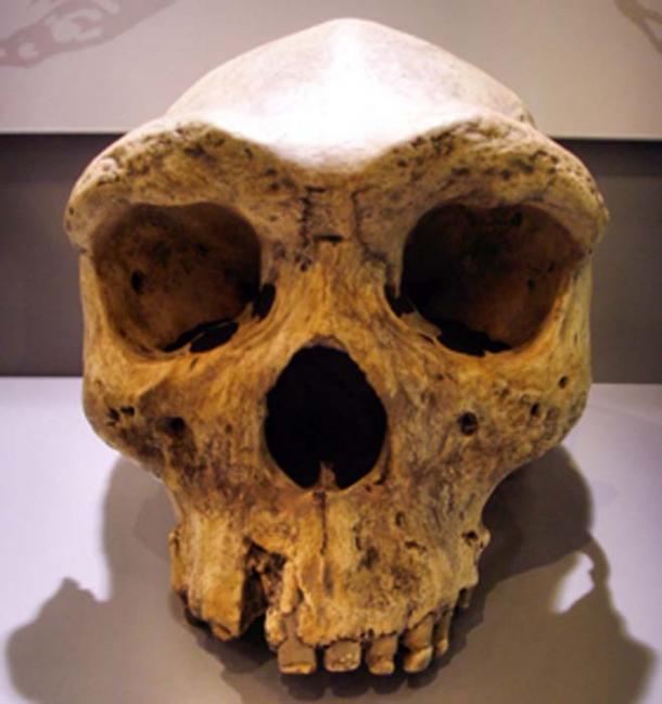 Especies extintas de homínidos arcaicos de hace 130.000 años. (Gerbil / CC BY-SA 3.0)