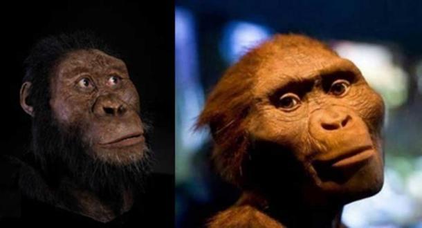 """Izquierda: la reconstrucción facial de Australopithecus anamensis por John Gurche fue posible gracias a la generosa contribución de Susan y George Klein. Fotografía de Matt Crow, cortesía del Museo de Historia Natural de Cleveland. Derecha: La exposición The Hidden Treasures of Ethiopia en el Museo de Ciencias Naturales de Houston con un modelo de """"Lucy"""". (Jason Kuffer/CC BY NC ND 2.0 )"""