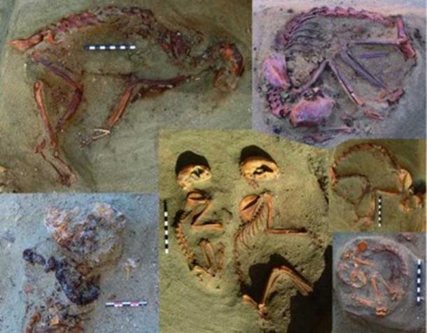 Descubierto en Egipto antiguo cementerio de mascotas con tumbas de 86 gatos