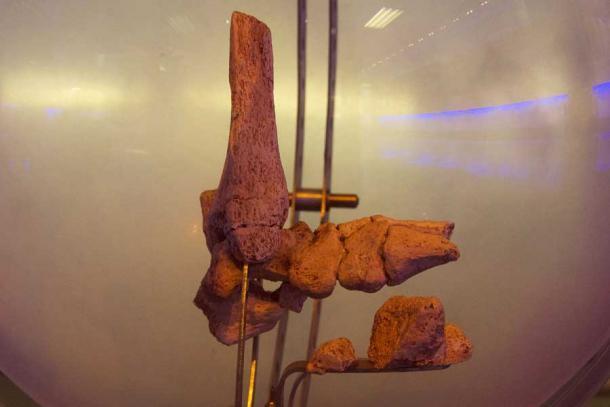 Huesos del pie de Pie Pequeño.