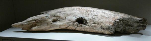 Colmillo de mamut fósil utilizado como yunque y banco de trabajo encontrado en Siberia, desde el Paleolítico medio (Wolfgang Sauber / CC BY-SA 3.0)