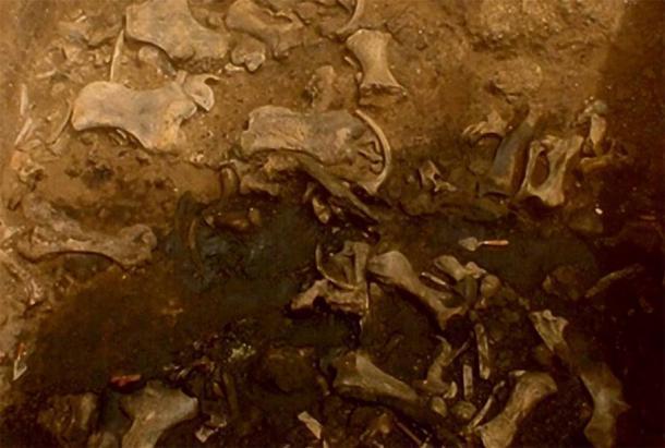 Fósiles encontrados en el hoyo de la muerte del perezoso gigante. (La Brea Tar Pits)