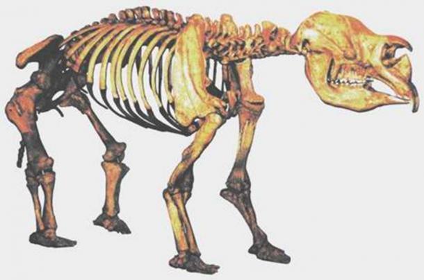 Foto de un molde de un esqueleto compuesto de Diprotodon excavado en el lago Callabonna, y en exhibición en el Museo de Queensland. El diprotodon era un marsupial del tamaño de un hipopótamo, muy relacionado con el wombat. (Dominio publico)