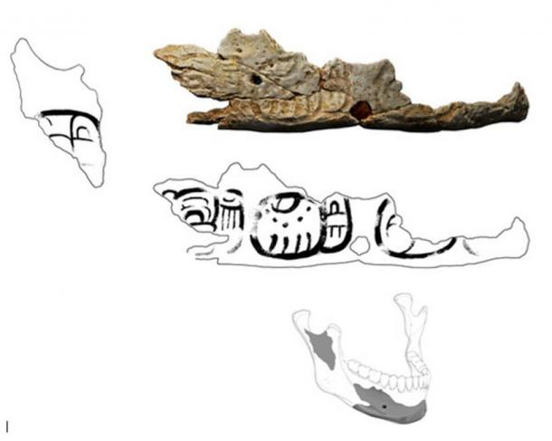 Fragmento del cráneo del trofeo de pacbitun. Dibujos de Christophe Helmke; Modelo laserscan por Jesse Pruitt