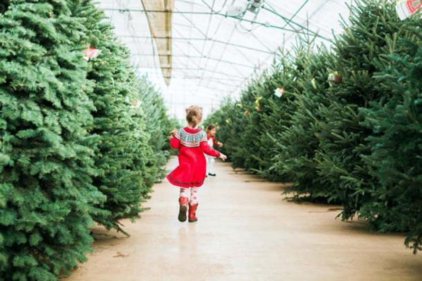 Una granja de árboles de navidad. (arinahabich / Adobe Stock)