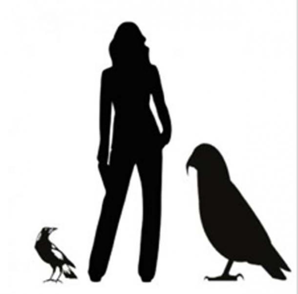 Gráfico que muestra la silueta de Heracles inexpectatus junto a una mujer de estatura promedio y una urraca común. (Imagen: Profesor Paul Scofield, Museo de Canterbury, Christchurch / Flinders University)