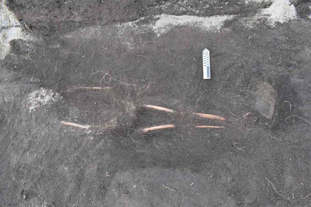 Se encontraron 12 esqueletos en el antiguo cementerio Inca. (EFE / Byron Ortiz / Proyecto Arqueológico Mulalo - Salatilin)