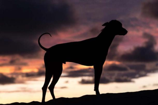 Hace menos de tres décadas, los perros sin pelo peruanos estaban al borde de la extinción. (Barna Tanko /Adobe Stock)