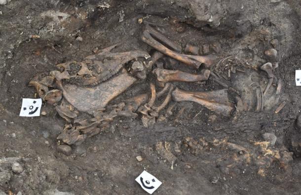 Un esqueleto de un hombre, enterrado con un caballo y un perro, fue encontrado en uno de los lugares de enterramiento de los barcos vikingos. (Arkeologerna)