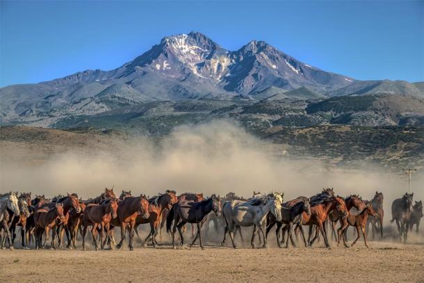 Manada de caballos salvajes. (klazing/ Adobe)