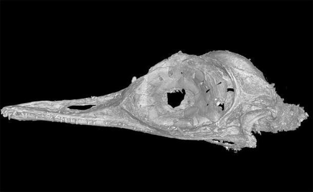 Este escaneo de alta resolución nos permitió ver las complejidades de una estructura ósea como nunca antes se había visto en pájaros o dinosaurios. Xing Lida, CC BY-ND / The Conversation