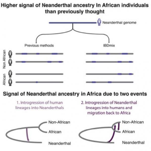 Se ha encontrado una señal más alta de ascendencia neandertal en individuos africanos de lo que se pensaba anteriormente. (Imagen: Lu Chen et al. / Cell)