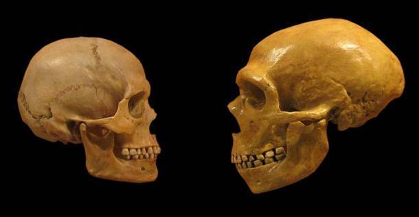 Un cráneo de Homo sapiens (izquierda) y un cráneo de neandertal: diferentes, pero también extremadamente similares en lo que respecta a las capacidades del habla. (hairymuseummatt (foto original), DrMikeBaxter (obra derivada) / CC BY-SA 2.0)
