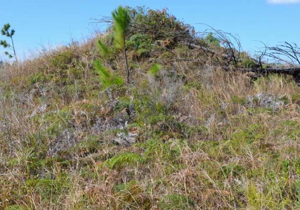 Vista del túmulo cubierto de vegetación en la Isla de Pinos. (Autor proporcionado)