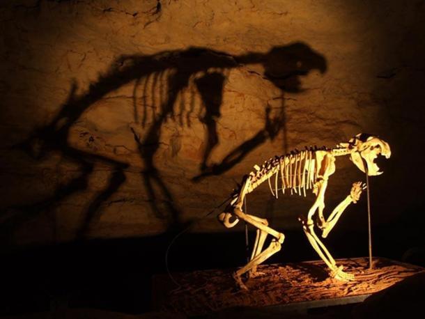 ¿Koalas asesinos? Un esqueleto de un león marsupial (Thylacoleo carnifex) en la Cueva Fósil Victoria, Parque Nacional de las Cuevas de Naracoorte. (Dominio público)