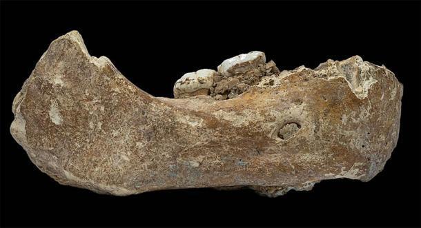 La mandíbula de Xiahe es el primer fósil denisovano descubierto fuera de la cueva Denisova en Siberia. Desenterrado en la cueva kárstica de Baishiya por un monje tibetano en 1980, los científicos utilizaron el análisis de proteínas en 2019 para identificar al humano antiguo de esta antigua mandíbula. (Dongju Zhang / CC BY-SA 4.0)