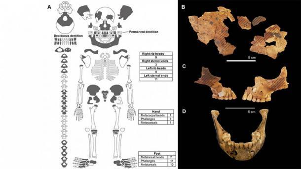 Se han descubierto restos de niños en la cueva Makpan en la isla Alor en Indonesia. Izquierda: Los elementos esqueléticos en gris oscuro han sido documentados del entierro. Derecha: reconstrucción de hueso frontal subadulto. Las líneas diagonales muestran la ubicación donde se encontró el pigmento ocre. (Dra. Sofia Samper Carro / ANU)