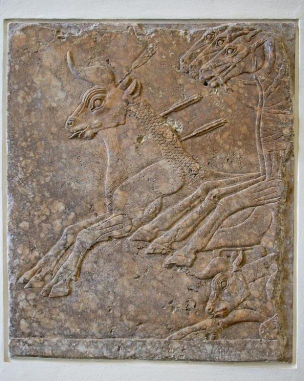 Sección refinada de bajo relieve de un friso de caza de toros de Nínive, alabastro, c. 695 a.C., (CC BY 3.0)
