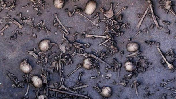 Los huesos de los muertos encontrados en el sitio de batalla de Tollense, que ahora se sabe que es el sitio de masacre más antiguo de Europa. (Oficina Estatal de Cultura y Preservación de Meckleburg-Vorpommern)
