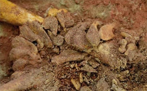 Detalle de cuentas de marfil de mamut y su disposición en la pelvis de uno de los bebés gemelos descubiertos en el sitio de Krems-Wachtberg en Austria. (OREA / Academia de Ciencias de Austria)