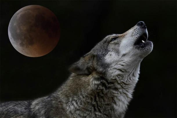 """Un lobo aullando a la luna llena: los lobos formaron una parte clave de la mitología y creencias eslavas. Estas creencias luego fueron """"secuestradas"""" por el cristianismo y se convirtieron en otra cosa. (bennytrapp / Adobe Stock)"""