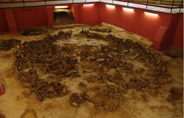 El museo-reserva Kostenki consta de 26 sitios arqueológicos del período paleolítico superior. Uno de sus sitios Kostenki 11 se conservó dentro del edificio del museo en 1979. Esta capa cultural representa los restos de viviendas antiguas hechas de huesos de mamut. Esta vivienda, artefactos de piedra y hueso y reconstrucciones artísticas del período de hielo representan la exposición moderna del museo. (Imagen: Información de museos rusos)
