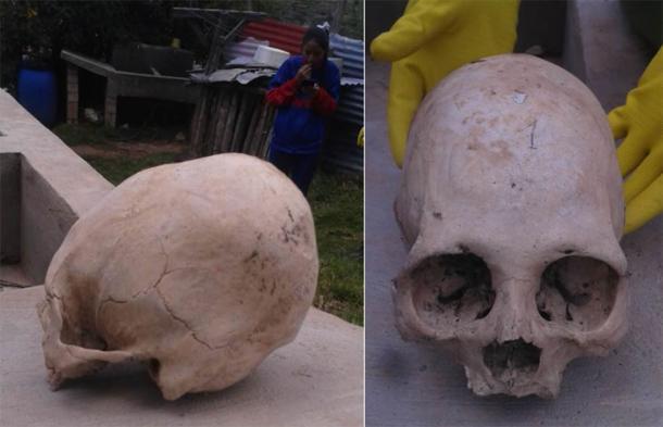 Ángulo lateral y frontal de los cráneos. (Imagen: © Philip J.S. Jones)
