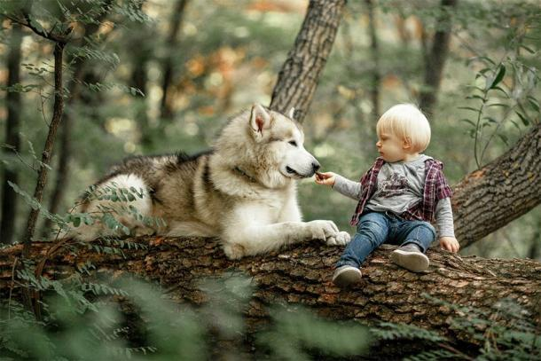 Aunque las teorías y explicaciones sobre la domesticación de perros varían mucho, todas sugieren que la proximidad del hombre y el lobo condujo a las relaciones que conocemos hoy, como esta. (Stanislav / Adobe Stock)