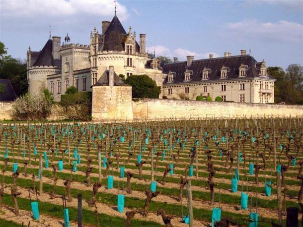 Los famosos viñedos del castillo de Brézé. (98octano / CC BY-SA 3.0)