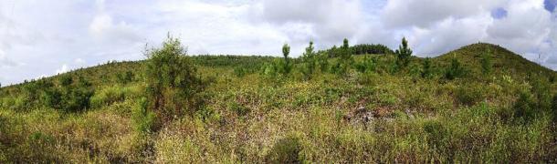 Pinos jóvenes en Île des Pins (Isla de los Pinos), Nueva Caledonia. (bennytrapp / Adobe Stock)