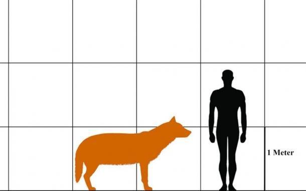 Comparación del tamaño de un lobo terrible y un humano. (Aledgn / CC BY-SA 4.0)