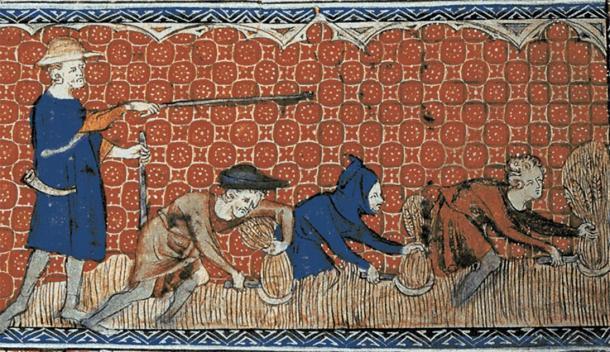 Ilustración medieval de hombres siervos que cosechan trigo con anzuelos a la orden de un arrecife. (Anónimo (Queen Mary Master) / Dominio público)