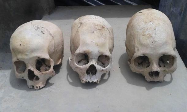 Tres de los cráneos, incluidos los dos cráneos extendidos. (Imagen: © Philip J.S. Jones)