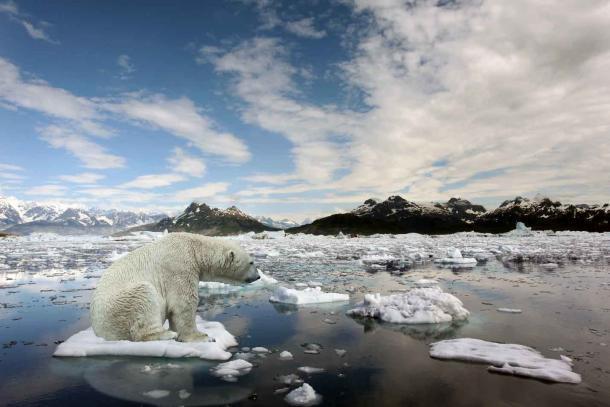Si los osos polares ya están tristes por el calentamiento global, imagínense cómo nos sentiremos cuando los eventos climáticos a largo plazo cambien todo lo que hemos considerado normal. (Alexander / Adobe Stock)