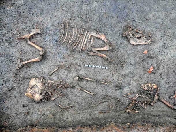 Una vez que se retiraron los jarrones durante la excavación, los arqueólogos pudieron ver mejor el esqueleto del bebé rodeado por un perro y un cerdo. (Ivy Thomson / INRAP)