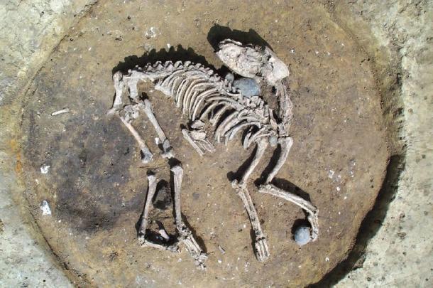 Entierro de perro de la Edad de Hierro encontrado cerca de grandes zanjas de límites / recintos (Arqueología de Wessex)