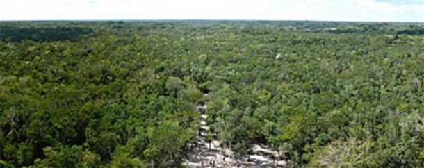 Millas y millas de selva, como se ve desde la cima de la pirámide Maya Nohoch Mul en el extremo norte del sitio arqueológico de Cobá. (Ken Thomas / Dominio público)