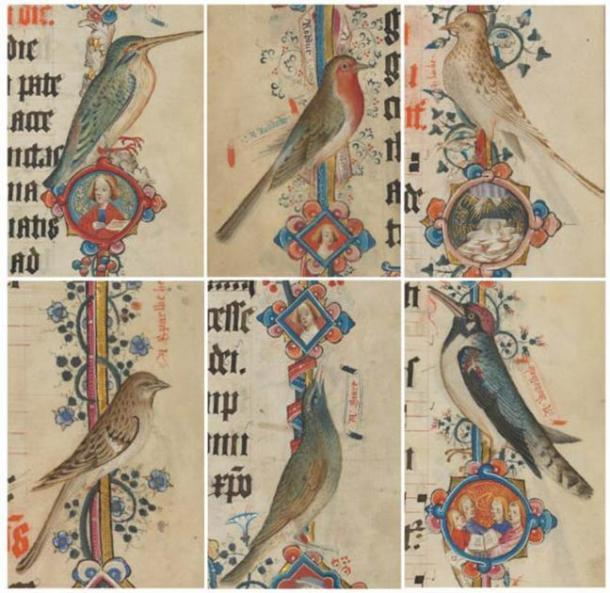 Martín pescador (kyngefystere), petirrojo (roddock), alondra (larke), gorrión común (gallina sparwe), estornino (mirar fijamente), pájaro carpintero manchado (wodewale): agregar MS 74236, págs. 383, 382, 369, 377, 385, 373 (detalles). (Dominio público)
