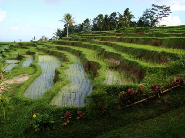 La agricultura invasiva humana altera el medio ambiente. (MGA73bot2 / CC BY-SA 4.0)