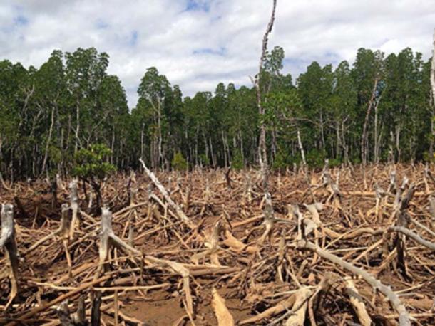 La deforestación tiene un gran impacto ambiental. (Cunningchrisw / CC BY-SA 4.0)