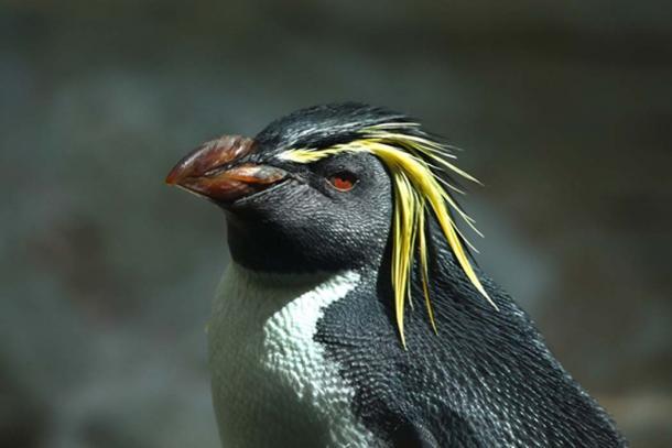 La isla de Gough del grupo de islas, Tristan De Acuña, es el hogar de especies que no se encuentran en ningún otro lugar. (Vladimir Wrangel/ Adobe)
