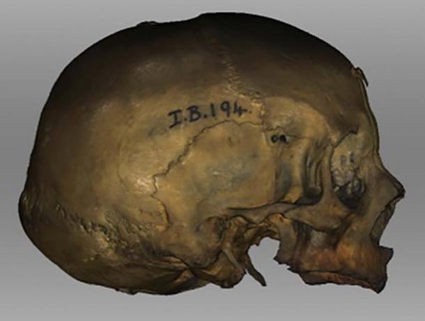 La reconstrucción se basó en este cráneo druida femenino de Stornaway en las Hébridas. (Universidad de Dundee)